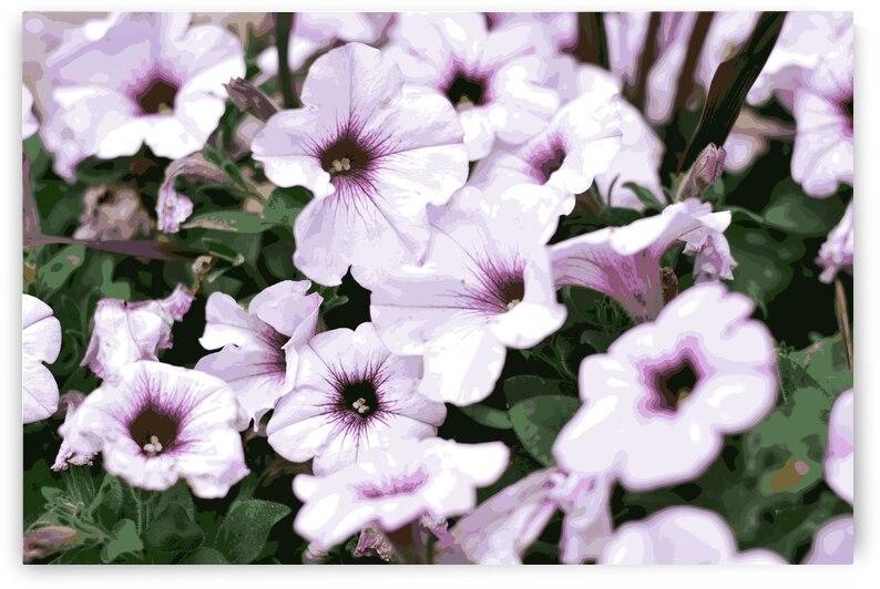 Petunia by Rachael Beauchamp