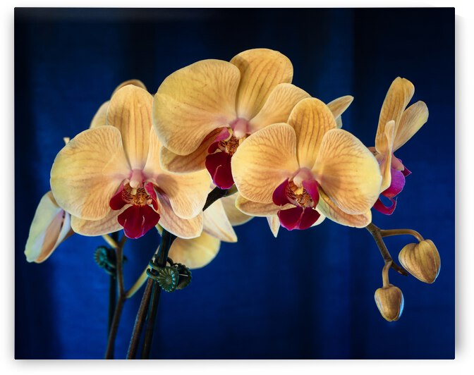 Orchids 5 by Dimitry Papkov