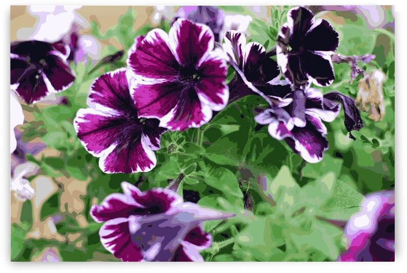 Wildflowers 029 by Rachael Beauchamp
