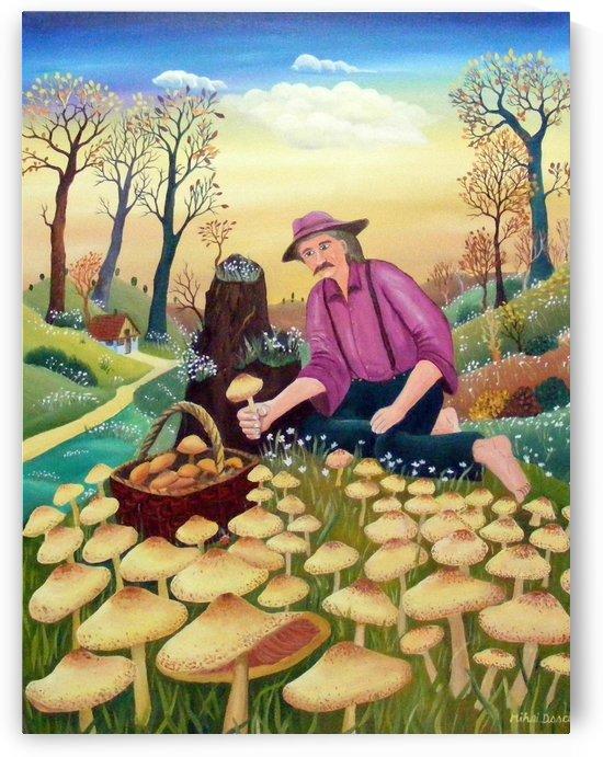 harvesting mushrooms by Mihai Dascalu