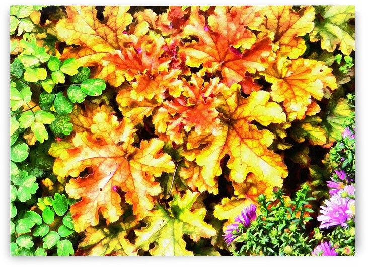 Heucherella In Autumn by Dorothy Berry-Lound