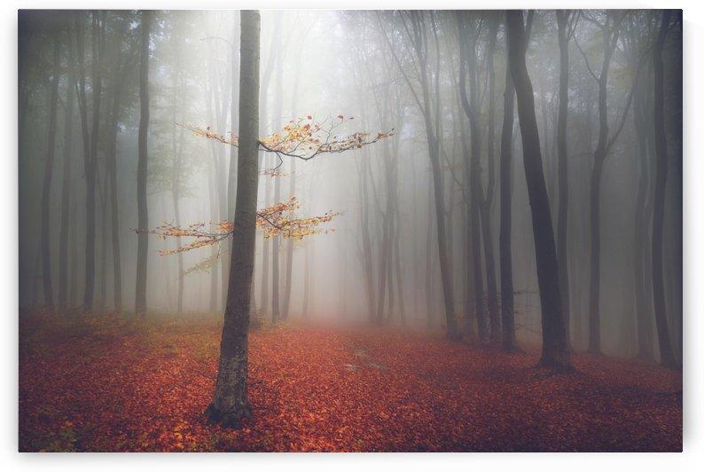 The light tree by Toma Bonciu