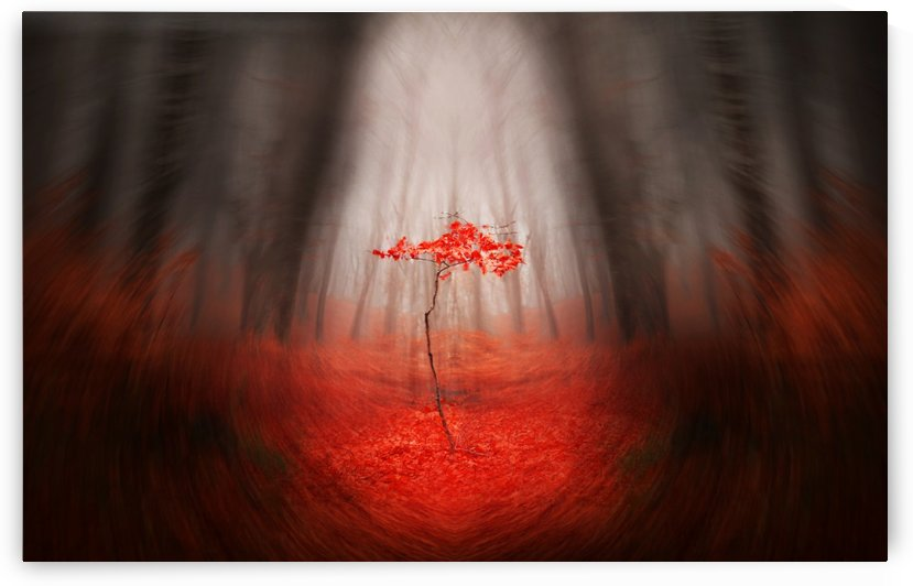 The Red tree by Toma Bonciu