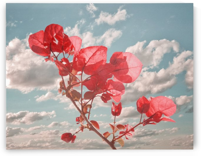Flowers in the Sky by Daniel Ferreia Leites Ciccarino