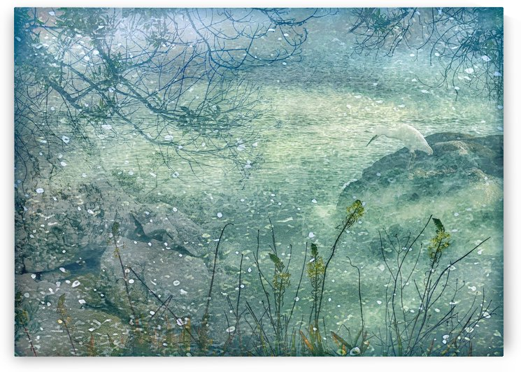 Memories of a Dream Nature Photo Collage by Daniel Ferreia Leites Ciccarino
