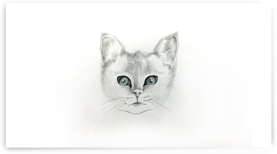 Cat by Aria