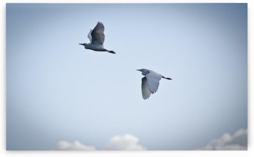 Birds duo by Fabien Dormoy