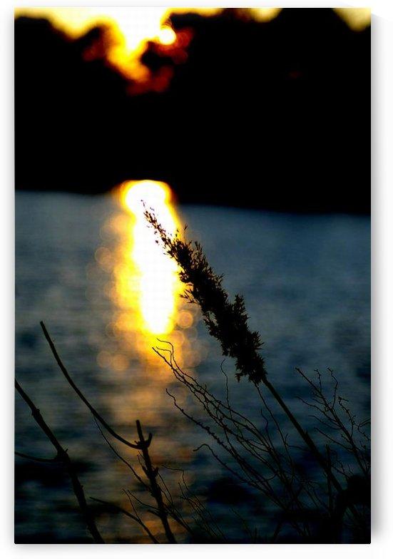 Sunlight by Devin Carney