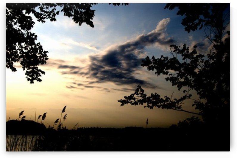 Deer In The Sky by Devin Carney