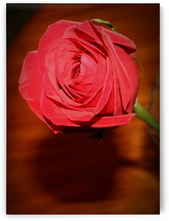 Rose Collection - 04 by Digitalu Photography
