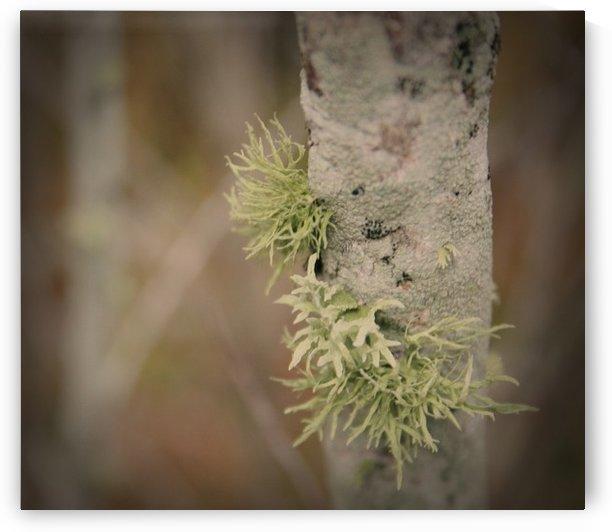 Nature - 11 by Digitalu Photography