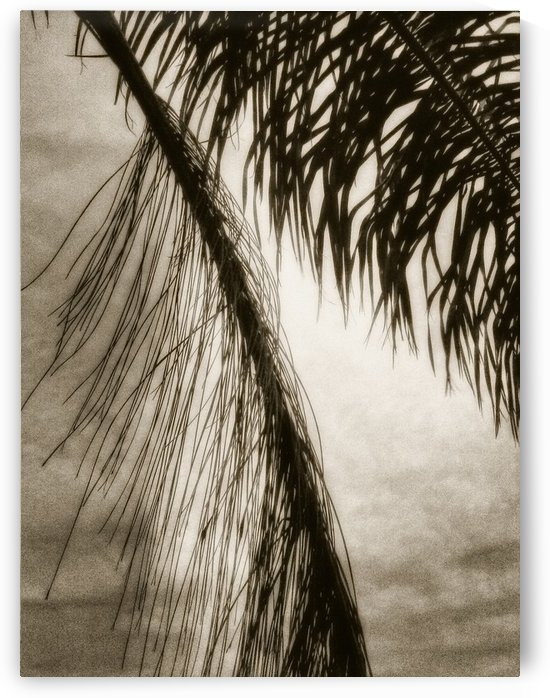 Nature - 12 by Digitalu Photography