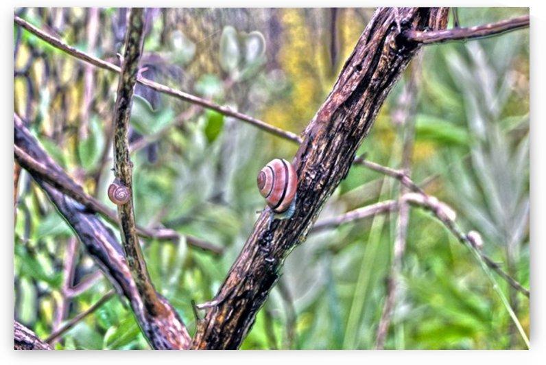 Snails by Rhonda M Barrett