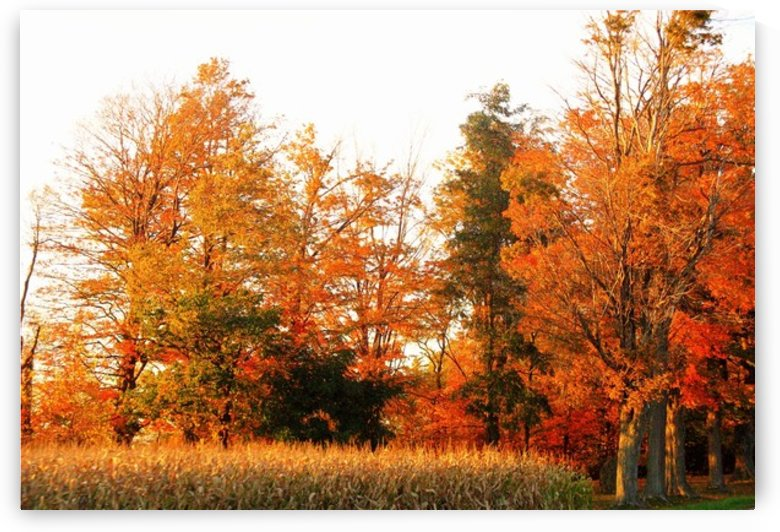 Trees of Fall by Rhonda M Barrett