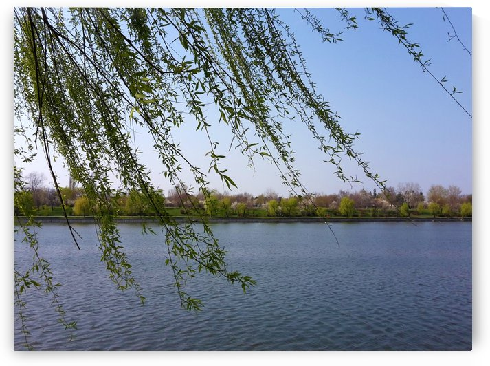 Willow and Lake in Spring by Daniel G