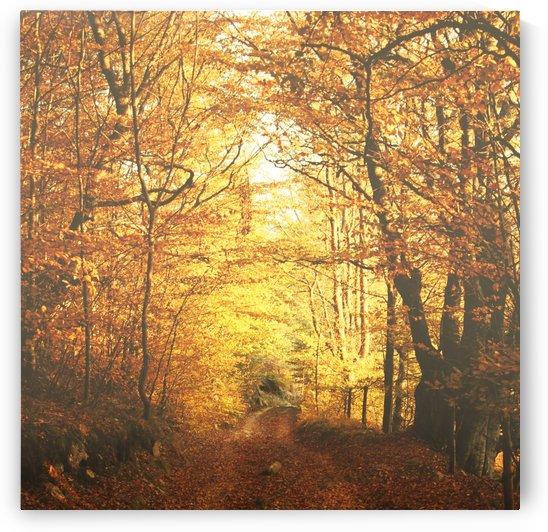 Autumn road by Marko Radovanovic