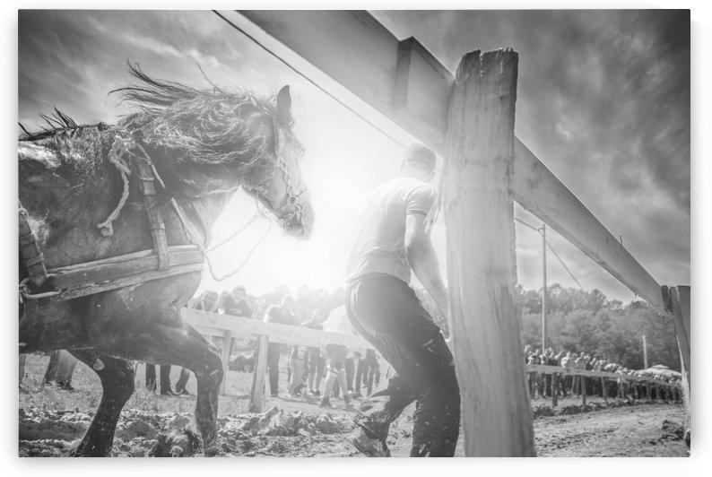 Man and horse  by Marko Radovanovic
