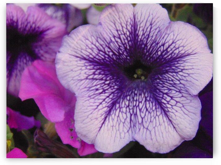 Purple Infusion by Kyla E  Duhart