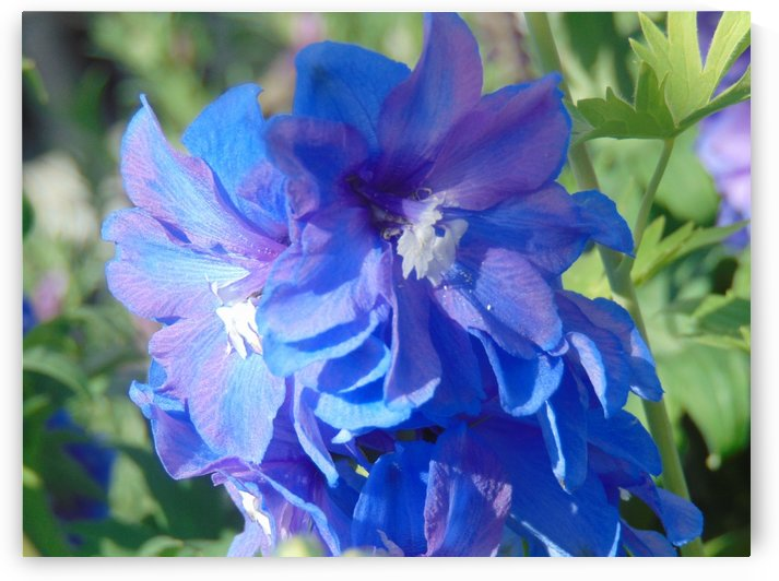 Blue Concentration by Kyla E  Duhart