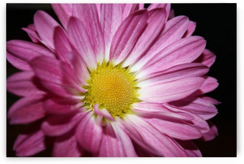 Spring has Sprung by Digitalu Photography