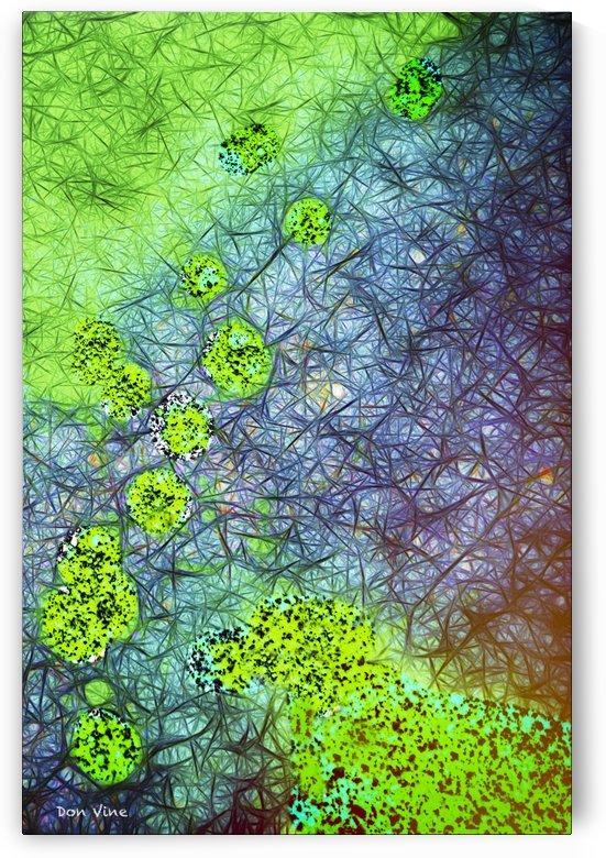Green Paint Drops_120828_17039 HXSYV by Don Vine