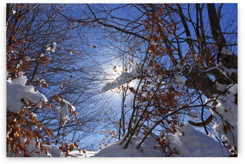Winter sun by Marko Radovanovic
