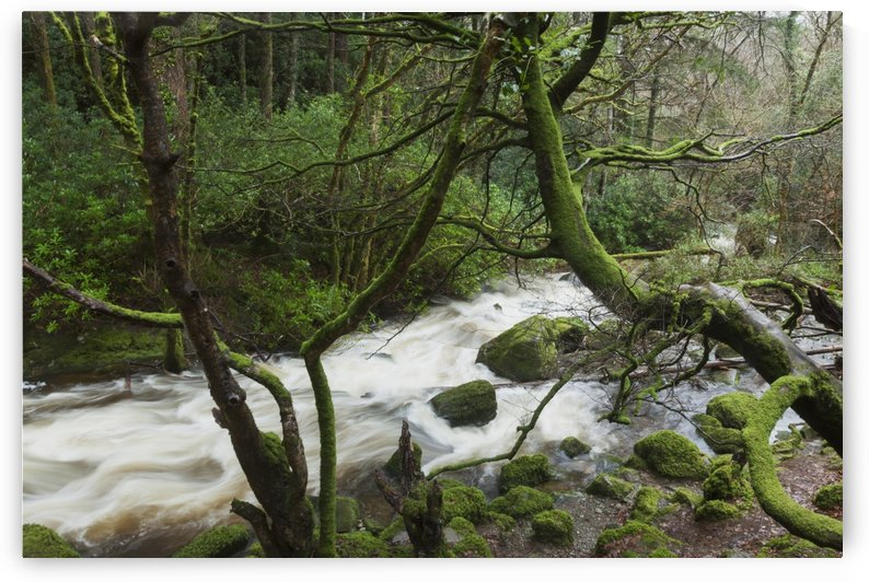 Creek near Torc Waterfall, Killarney National Park; County Kerry, Ireland by PacificStock