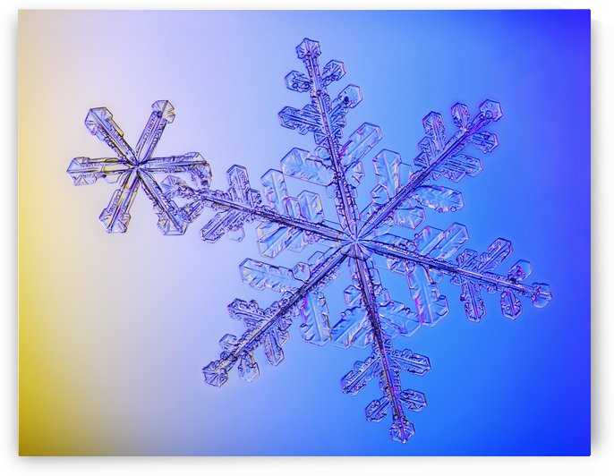 Photomicroscopic close up of two snowflake crystals, Alaska by PacificStock
