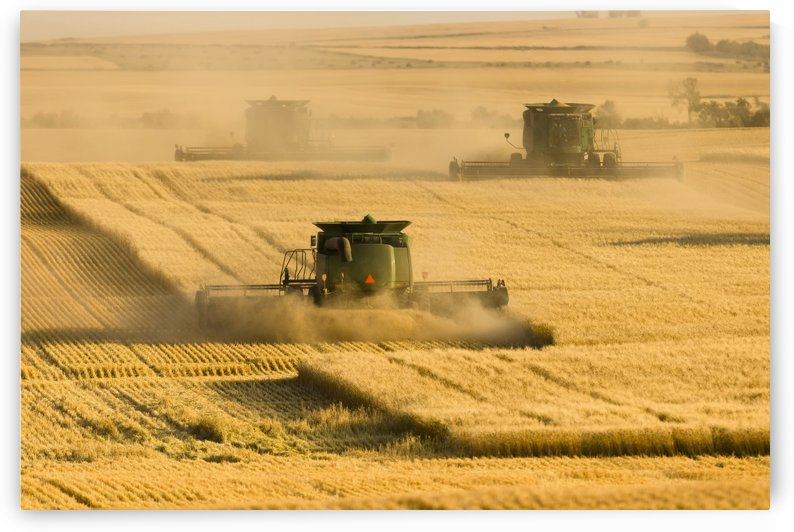 Paplow Harvesting Company custom combines a wheat field, near Ray; North Dakota, United States of America by PacificStock