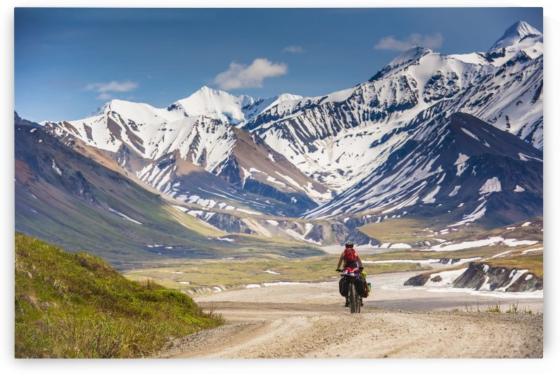 A Woman bicycle touring in Denali National Park, Grassy Pass, Southcentral Alaska by PacificStock