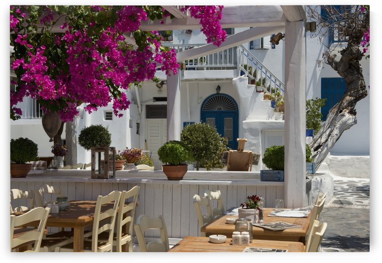 Bougainvillea growing around a taverna; Mykonos Town, Mykonos, Cyclades, Greek Islands, Greece by PacificStock