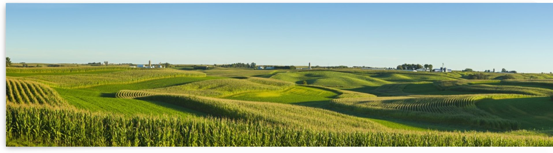 A panoramic view of alfalfa fields and corn fields that are terraced among dairy farms; Iowa, United States of America by PacificStock
