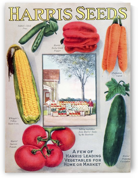 Historic Harris seeds catalog with illustration of vegetables from 20th century. by PacificStock