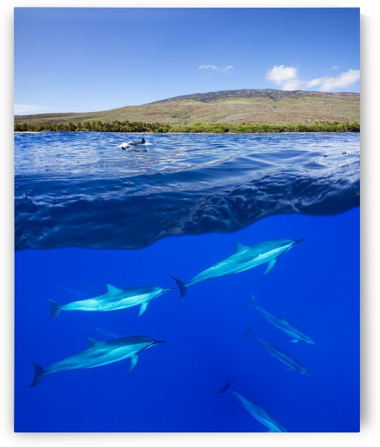 A split view of spinner dolphin (Stenella longirostris) below water and the island of Lanai above; Hawaii, United States of America by PacificStock