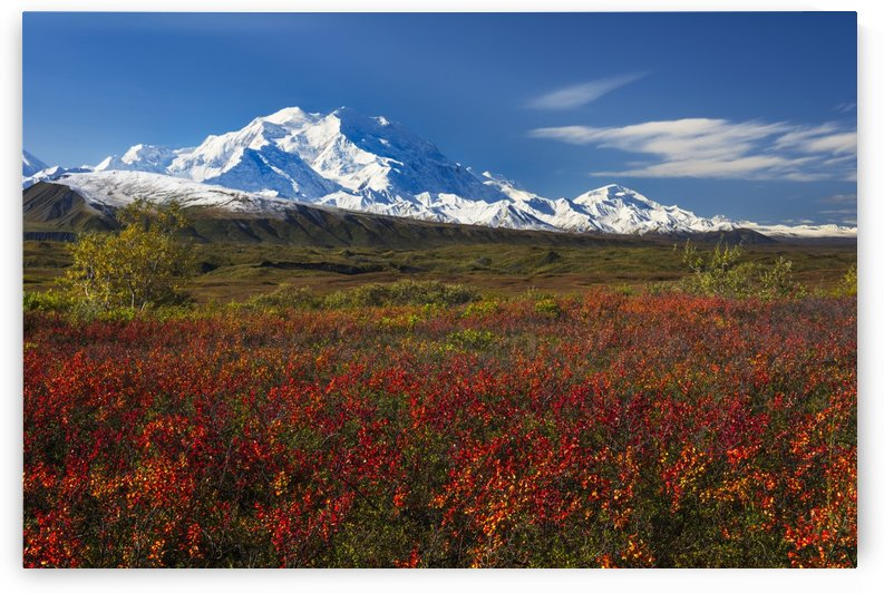 Fall colors and morning light on Denali in Denali National Park & Preserve, Alaska. by PacificStock
