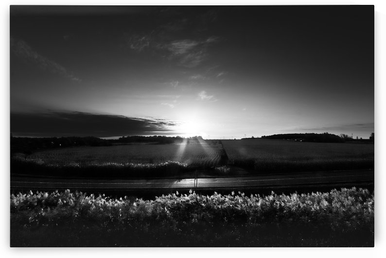 SUNRISE 001 by Roger Branker