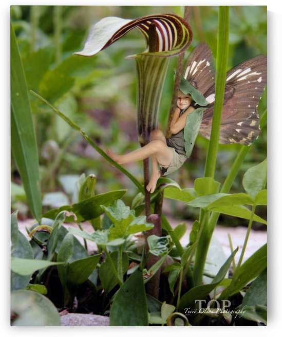 Jack in the Pulpit by Terri Olson