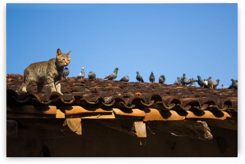 Cat and Birds by Jeetendra Kumar Choudhary
