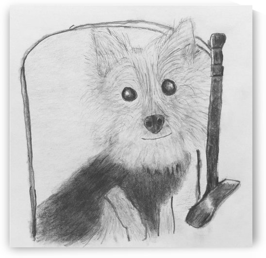 This is Hopper! by Jackie Popp