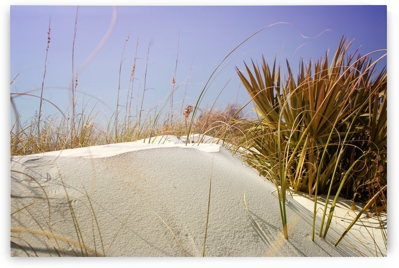 Florida Beach 3 by Christopher Dormoy
