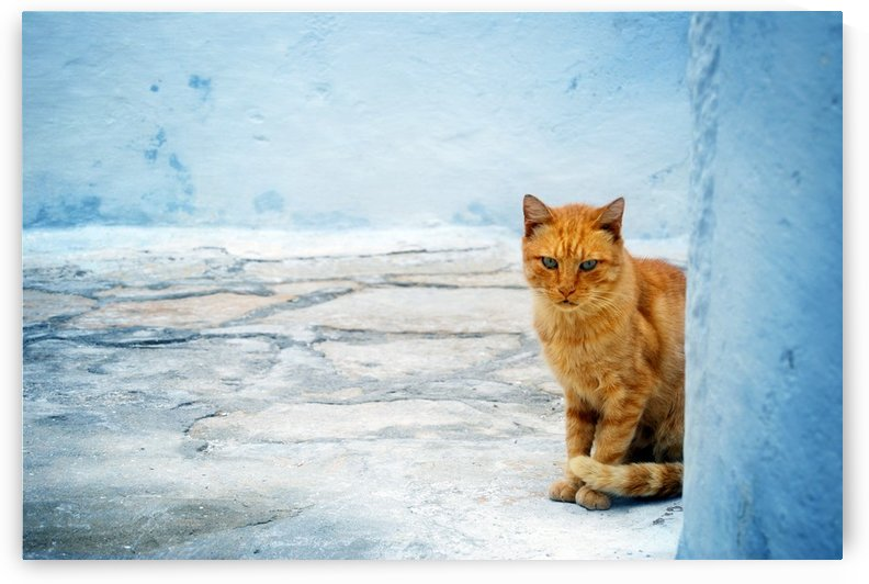 Cat by Christopher Dormoy