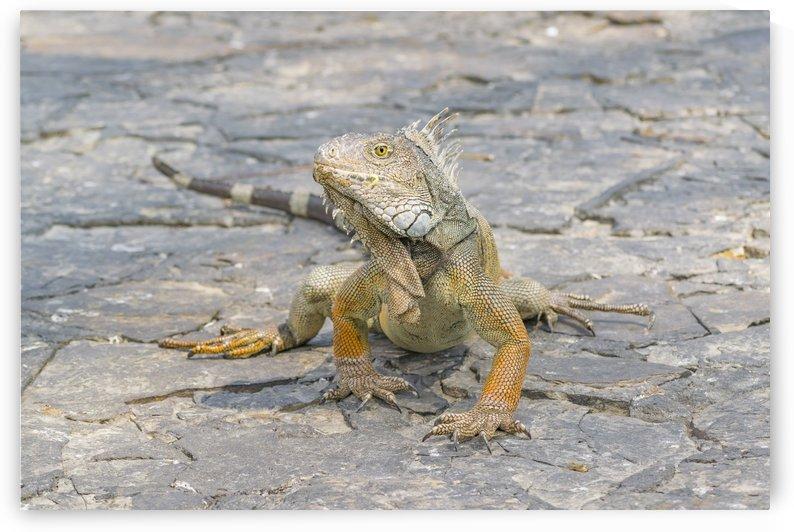 Iguana Park Guayaquil Ecuador by Daniel Ferreia Leites Ciccarino