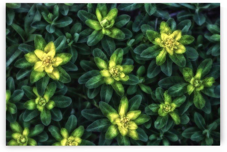 Magic Green by Michel Nadeau