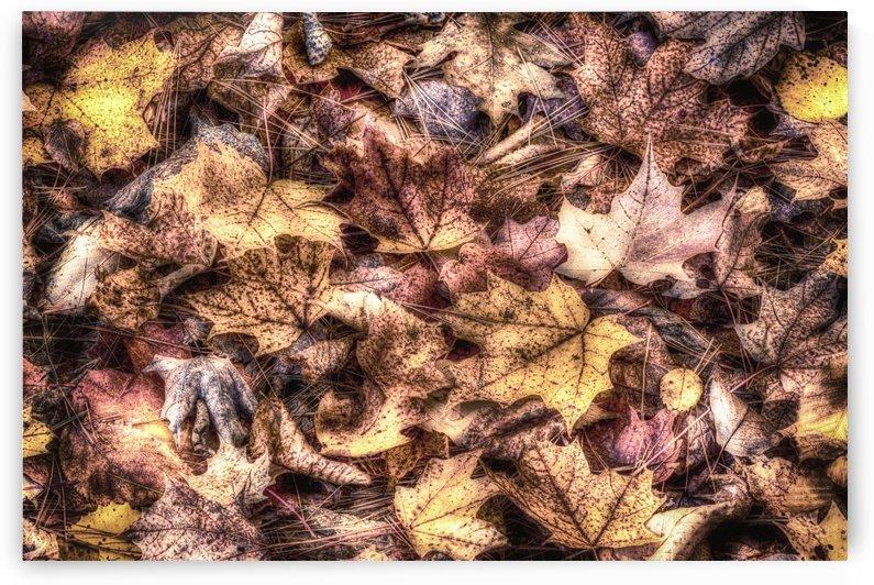 Autumn Gold by Michel Nadeau