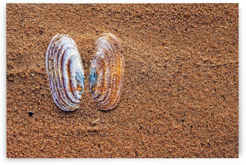 Sea Butterfly by Michel Nadeau