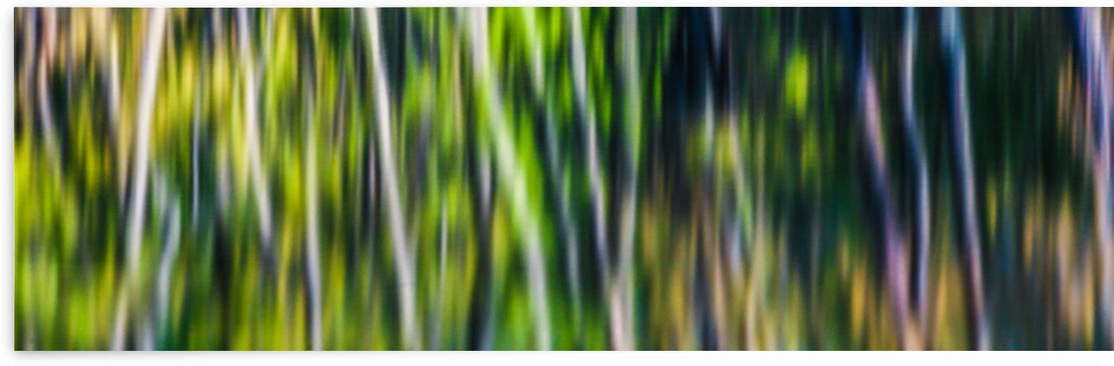 Riverside Trees by Michel Nadeau