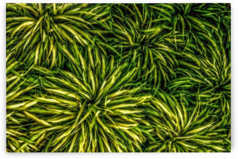 Green Chaos by Michel Nadeau