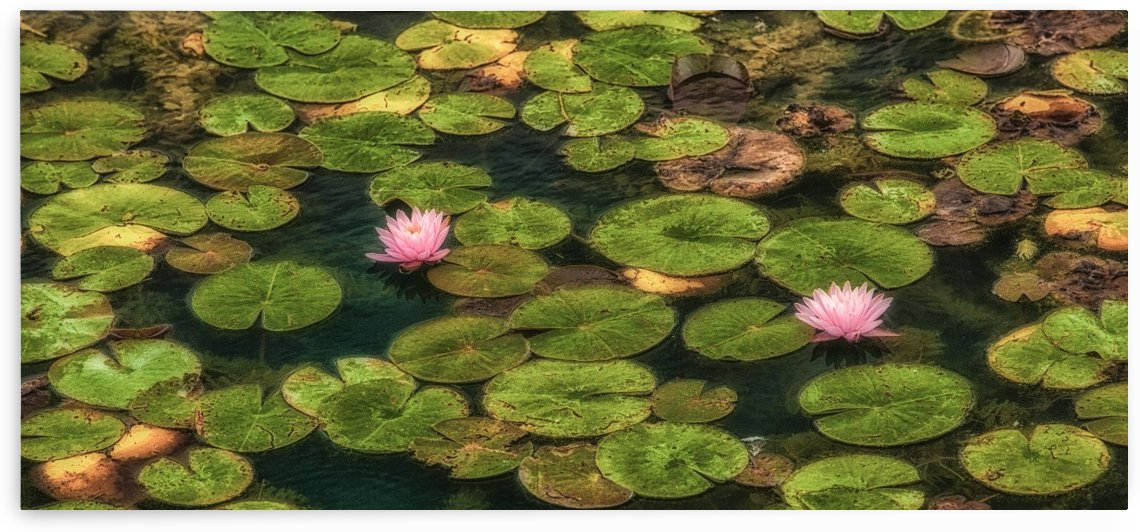 Lilypond Obsession by Michel Nadeau
