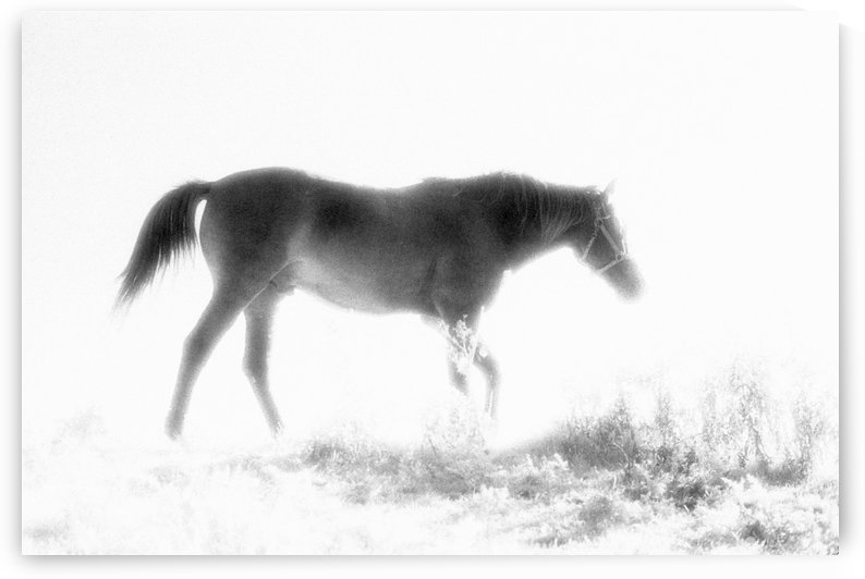Mary's Horse by Michel Nadeau
