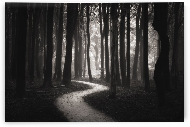 Snakes path by Janek Sedlar